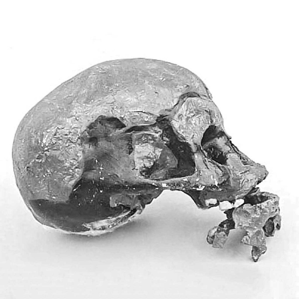 Niah Skeletal Remains returns home after half a century